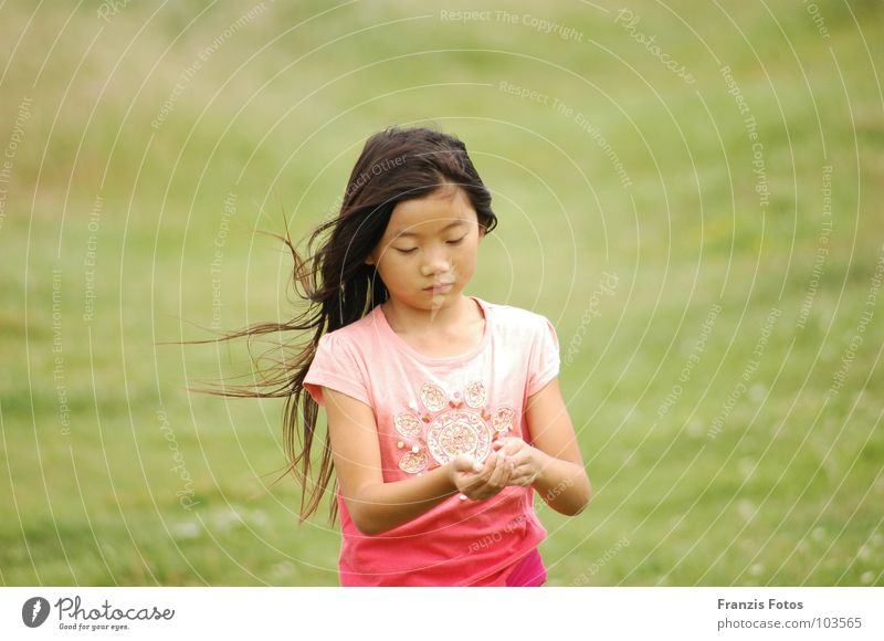 Child Girl Meadow Sadness Wind Grief Curiosity China Japan Asia Foreign countries