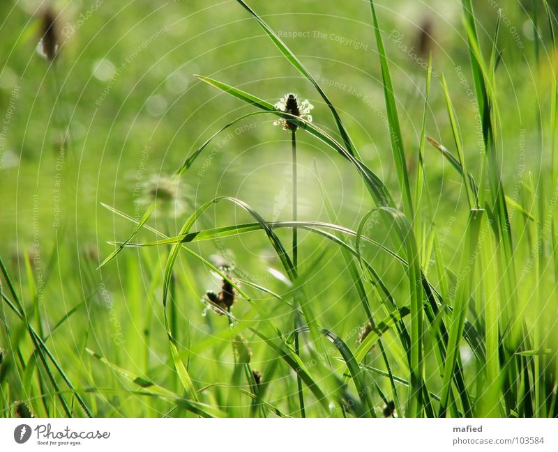 Sun Green Summer Meadow Blossom Grass Dream Warmth Wind Lie Physics Stalk Blade of grass Smooth Bend Hiding place