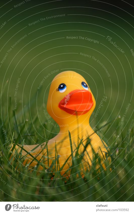 Rubber Ducky, you're the one Playing Grass Squeak duck Leisure and hobbies yellow duck Lawn Colour photo Exterior shot Copy Space top Shallow depth of field