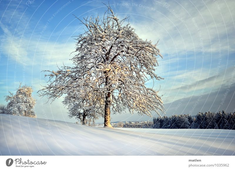 Time of long shadows Nature Landscape Plant Sky Clouds Horizon Winter Weather Beautiful weather Snow Tree Meadow Forest Hill Cold Blue Brown White Shadow