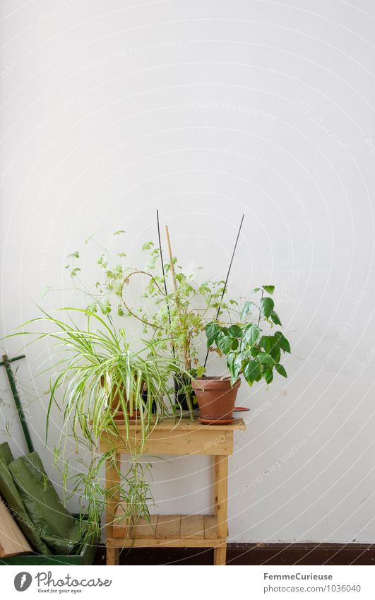 Plant table. Bushes Leaf Foliage plant Pot plant Wall (barrier) Wall (building) Living or residing Houseplant Wooden table Shelves Decoration Flat (apartment)