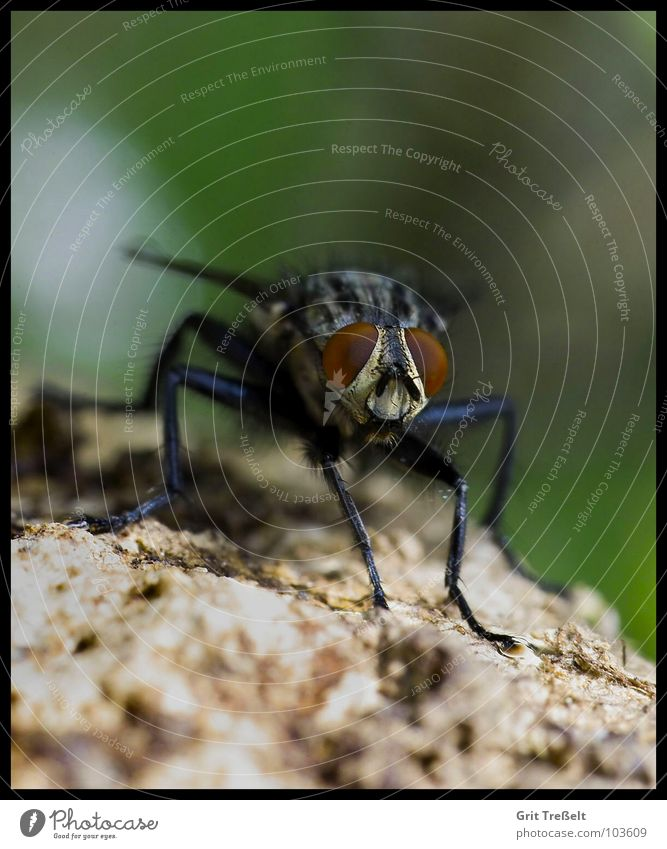 Summer Eyes Fly Flying Insect Annoy Bothersome