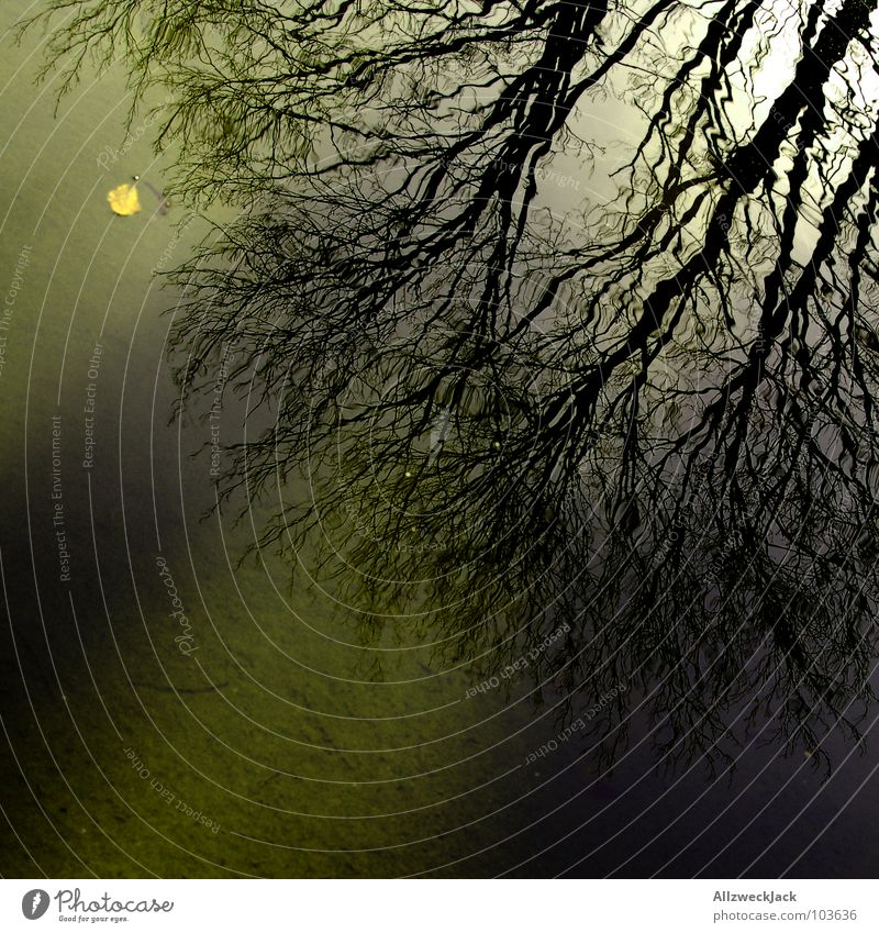 Attack of the mirror branch Mirror Reflection Wet Tree Branchage Branched Rotated Inverted Dark Shadow Rooted Silhouette Lake Surface of water Water Autumn