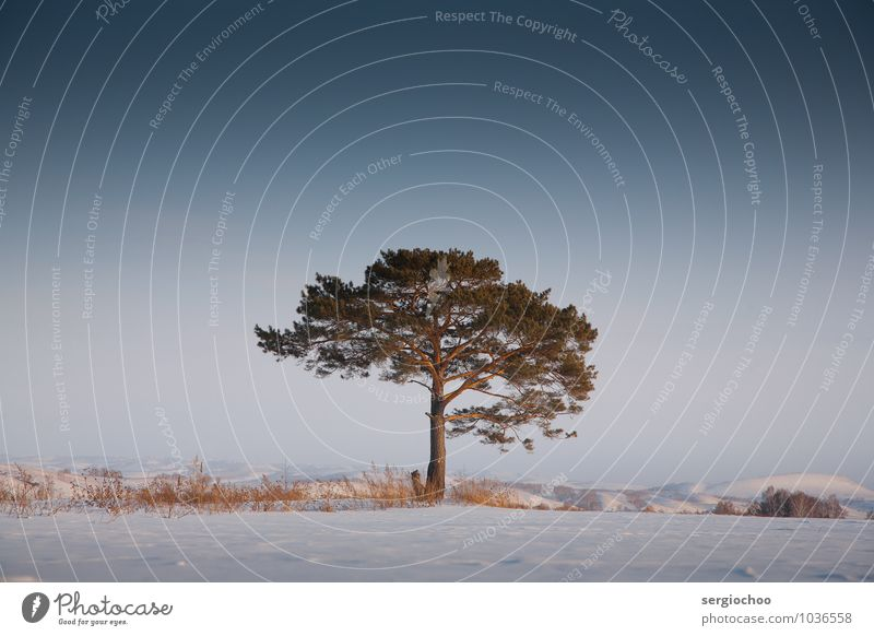 lonely tree Nature Tree Relaxation Loneliness Landscape Winter Forest Cold Mountain Snow Moody Art Power Bushes Frost Hill