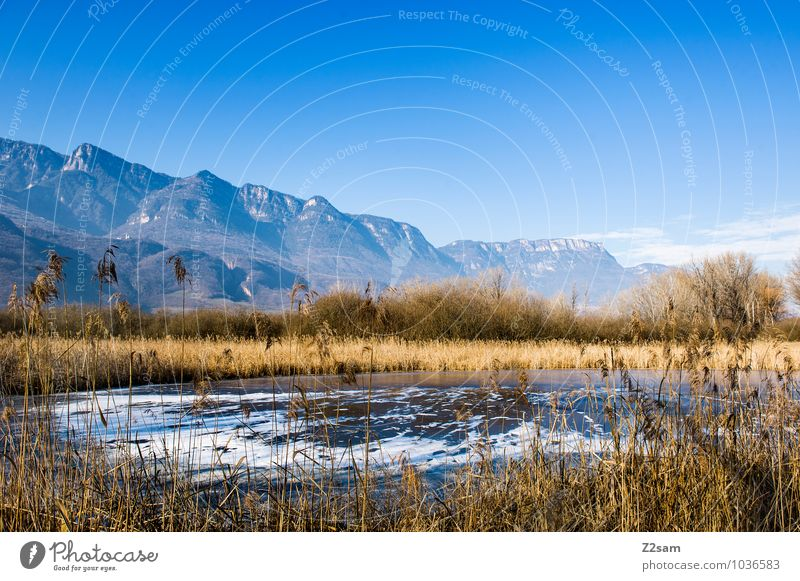 Kalterer Moor Mountain Environment Nature Landscape Cloudless sky Summer Plant Common Reed Alps Lakeside Bog Marsh Fresh Cold Sustainability Natural Blue