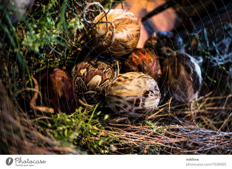 feather eggs Easter Lie Growth Exceptional Near Brown Green White Safety (feeling of) Warm-heartedness Hope Belief Nest Twigs and branches Grass Colour photo