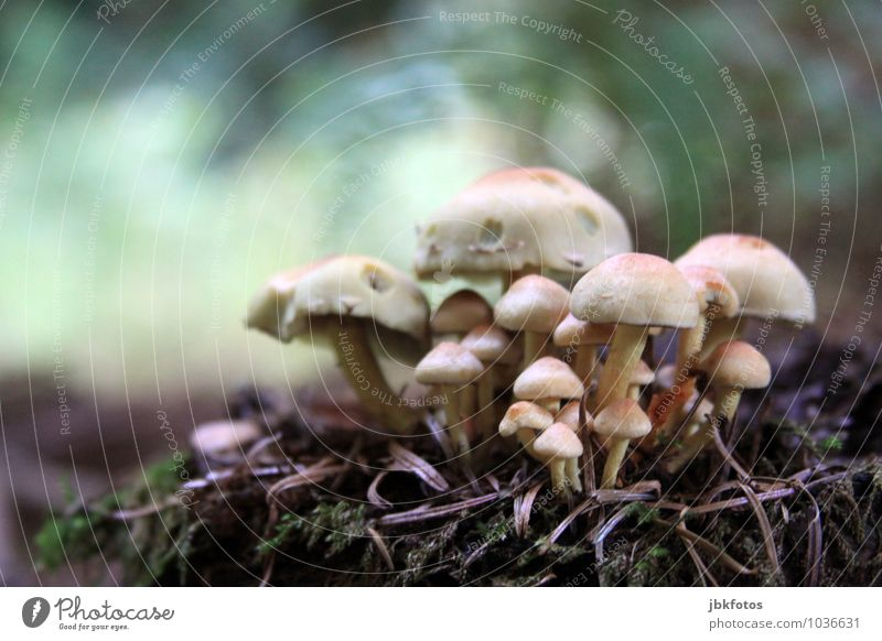 Magical Environment Nature Climate Plant Agricultural crop Wild plant Mushroom Mushroom cap mushroom group Garden Park Meadow Forest Joy Happy Bravery