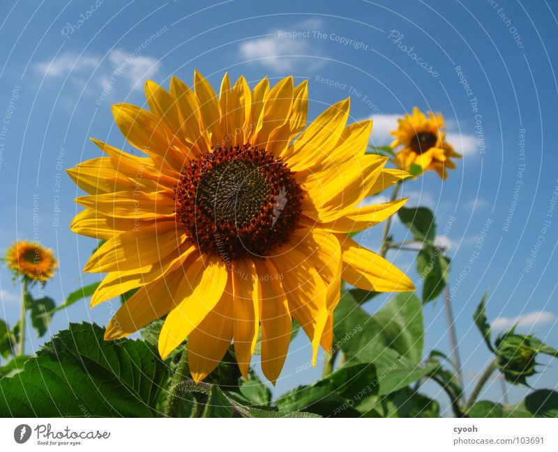 Beautiful Sky Flower Green Blue Summer Yellow Blossom Warmth Brown Field 3 Circle Open Near Physics