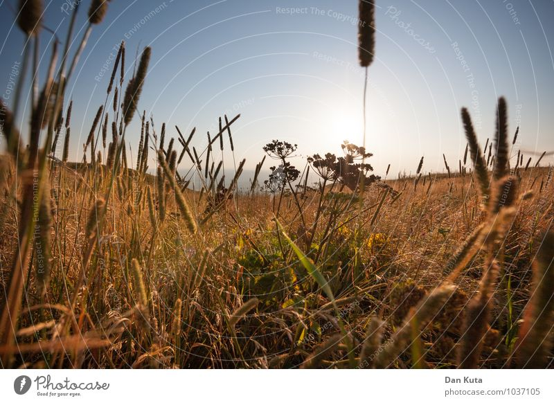 Sky Blue Summer Sun Landscape Meadow Cloudless sky Flower meadow Grass blossom