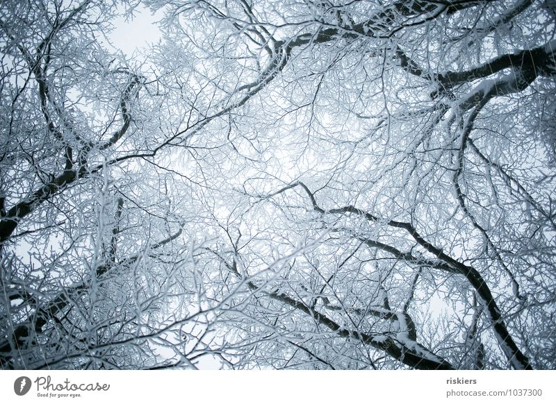 frozen forest ii Environment Nature Plant Winter Weather Ice Frost Snow Snowfall Tree Forest Esthetic Threat Cold Beautiful Gloomy Blue Calm Purity Longing
