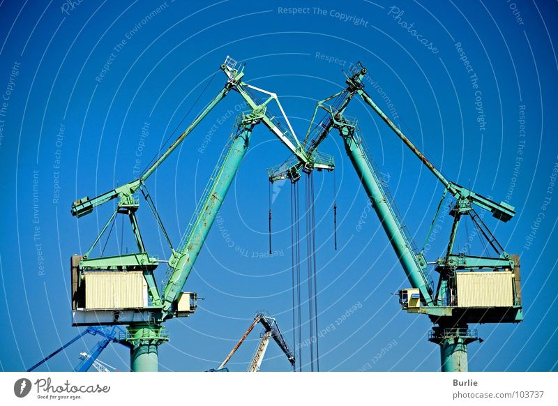 Cranes in love Green Interaction Large Industry Sky Blue Technology Love foothills Tall