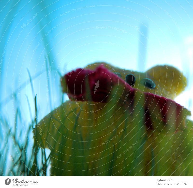 Sky Blue Yellow Lawn Bear Teddy bear Plush