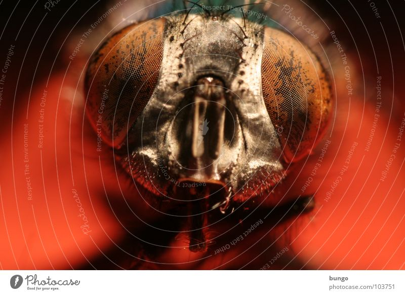 Animal Eyes Fly Insect Near Watchfulness Intuition Compound eye Mandible