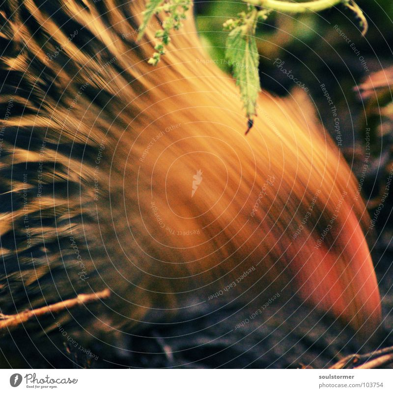 grasp one's food Barn fowl Animal Rooster Nutrition Grain Blur Motion blur Bird Egg Food Close-up Feather Earth Movement