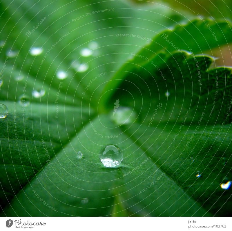 trickle Leaf Wet Green Water Drops of water Rain Sphere Rope jarts