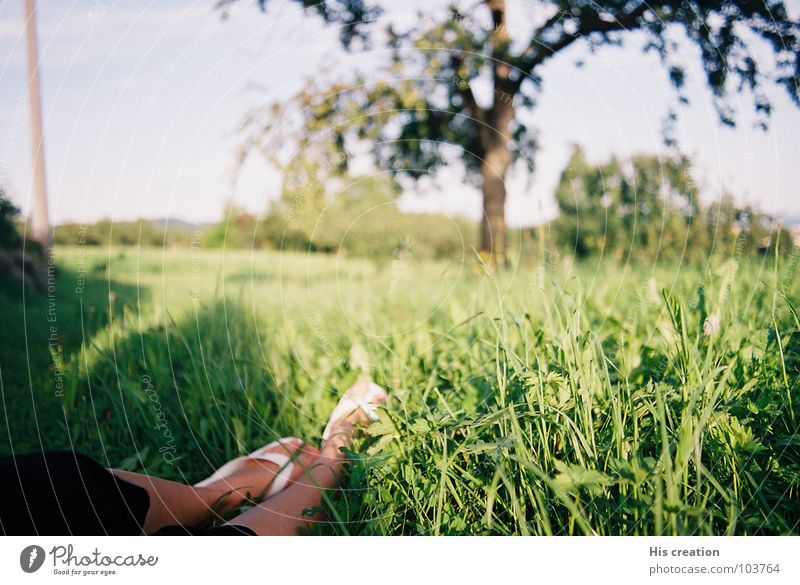 Woman Nature White Tree Green Summer Joy Calm Relaxation Meadow Freedom Feet Warmth Physics Flip-flops Apple tree