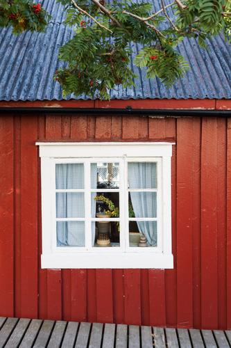Old Blue Colour Tree Red House (Residential Structure) Window Life Architecture Building Wood Facade Living or residing Idyll Happiness Romance