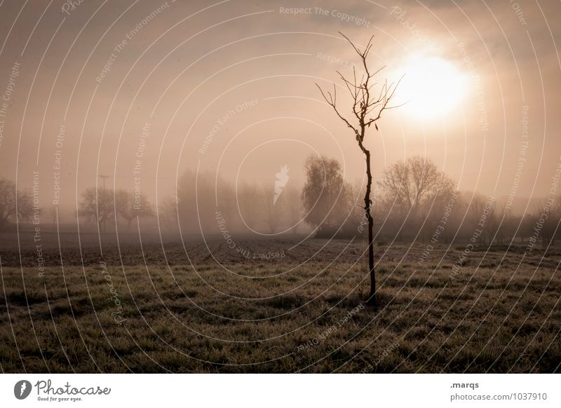 dawn Trip Environment Nature Landscape Sky Autumn Climate Fog Tree Meadow Field Fresh Natural Moody Beginning Loneliness Apocalyptic sentiment Bleak