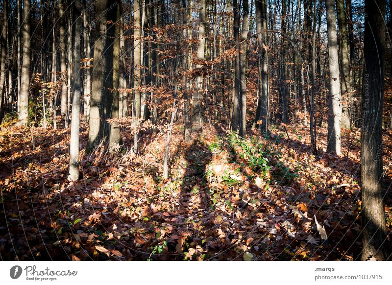 Human being Nature Tree Landscape Forest Environment Autumn Natural Moody Earth Stand Hiking Trip Tree trunk Whimsical