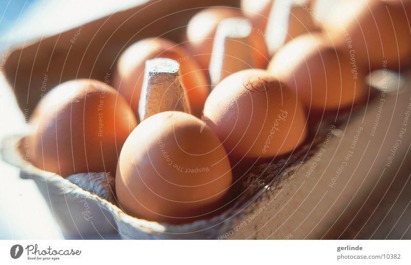 eggs Food Nutrition Egg