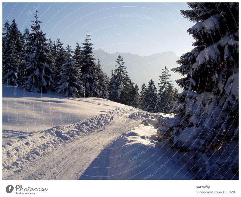 Sky Nature Beautiful Landscape Winter Mountain Snow Background picture Trip Alps Fir tree Bavaria Gorgeous Tree Winter mood Garmisch-Partenkirchen