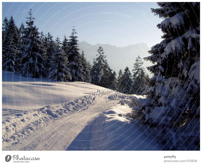 Sky Nature Beautiful Landscape Winter Mountain Snow Background picture Trip Alps Fir tree Bavaria Gorgeous Tree Winter mood Garmisch-Partenkirchen