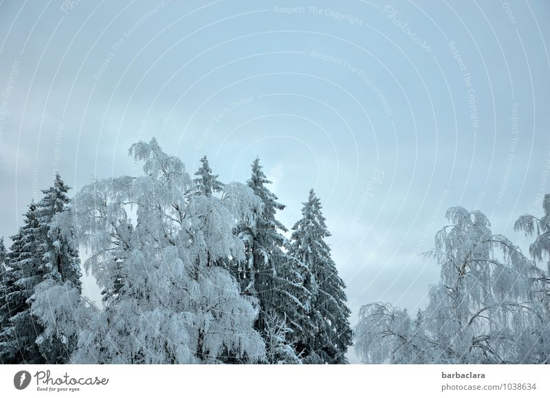 Sky Nature Blue White Tree Landscape Calm Winter Far-off places Forest Cold Environment Snow Gray Moody Bright