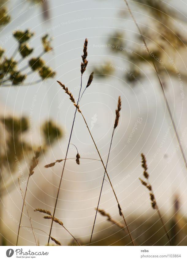 Nature Flower Green Summer Joy Colour Meadow Spring Field Americas Blade of grass