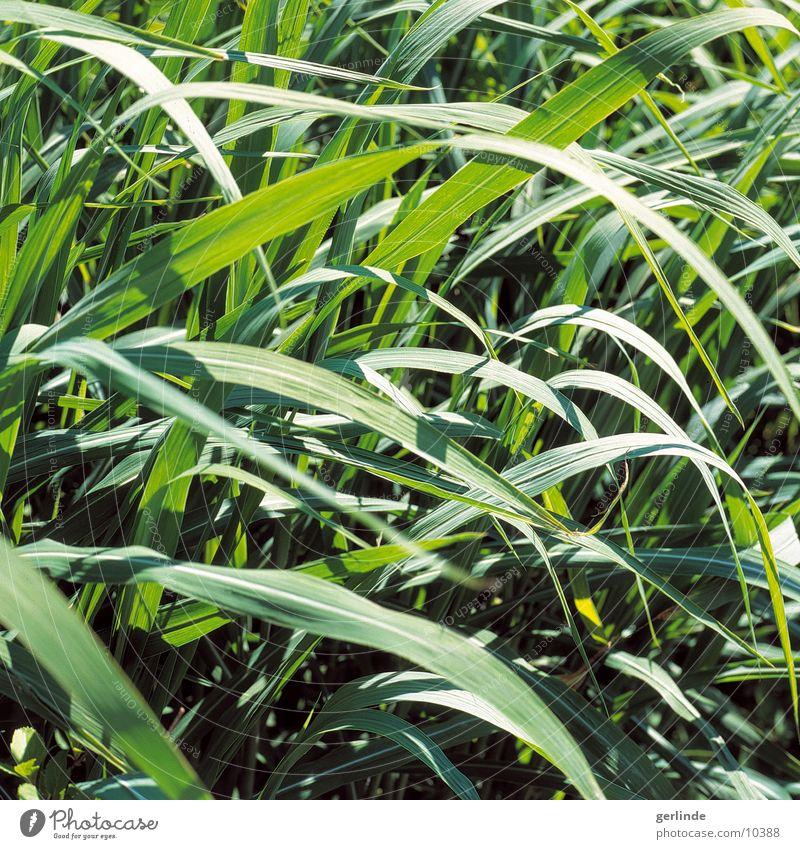 green Grass Summer Meadow Nature Plant