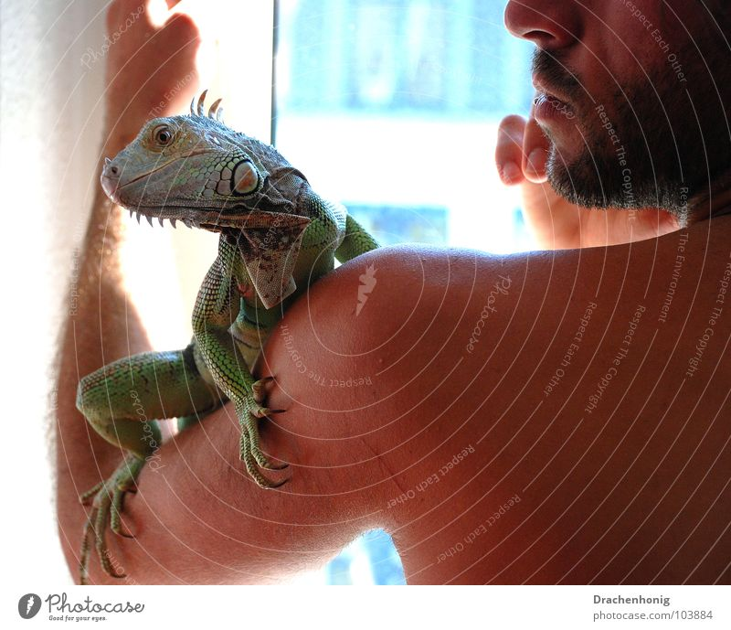 The Iguana Man Window Naked Upper body Extravagant Pet Dragon Saurians Zoo Animal Reptiles Terrarium Friendship Vertauen Grief Safety Transience Together Green