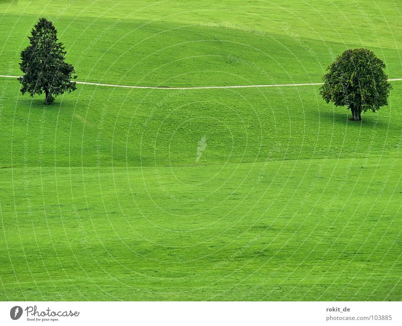 Tree Green Summer Calm Leaf Loneliness Meadow Grass Lanes & trails Landscape Line Together Simple Branch Hill Fat