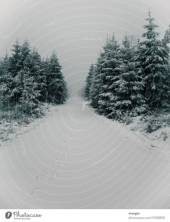Nature Plant Green White Tree Relaxation Loneliness Calm Winter Forest Cold Lanes & trails Snow Growth Bushes Esthetic