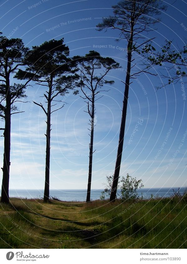 Sky Tree Ocean Beach Vacation & Travel Relaxation Coast Beach dune