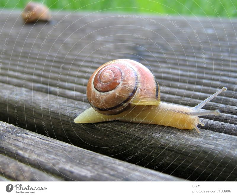 Animal Lanes & trails Small Garden Break Cute Balcony Border Brave Barrier Divide Goodbye Snail Racecourse Crawl Column