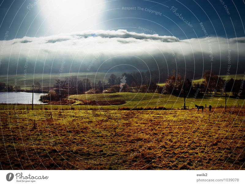 Sky Nature Plant Tree Landscape Calm Clouds House (Residential Structure) Animal Far-off places Environment Meadow Grass Bright Horizon Illuminate