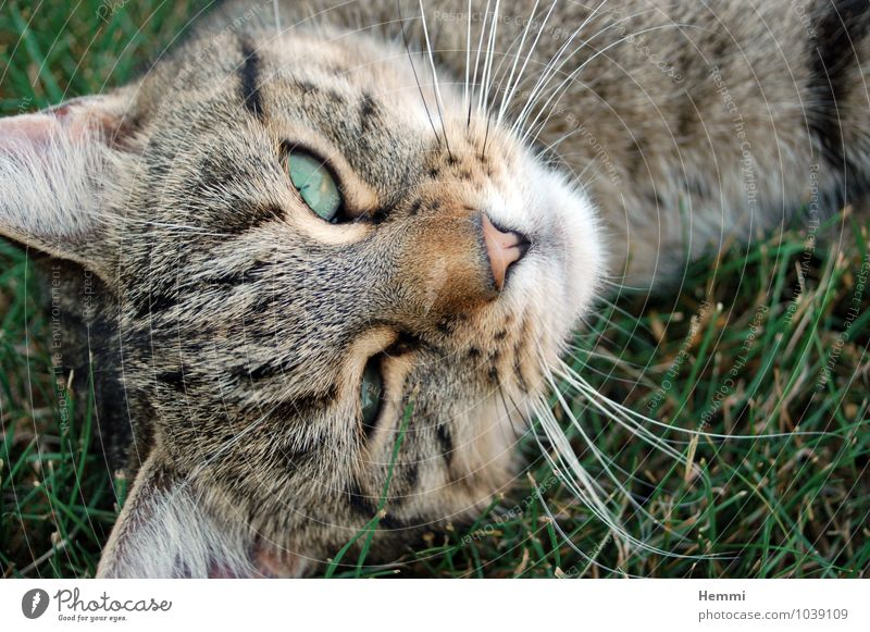 Cat Animal Lie Sleep Pet Domestic cat Cat eyes Cat's head