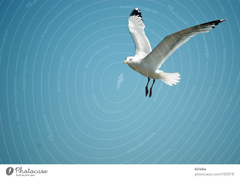 Beautiful Sky White Blue Black Animal Freedom Bird Elegant Flying Tall Infinity Deep Seagull