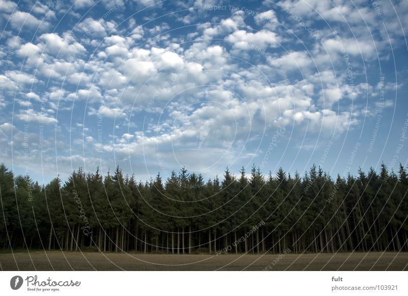 Nature Sky Tree Green Clouds Forest Fear Europe Creepy Fir tree Panic Eerie