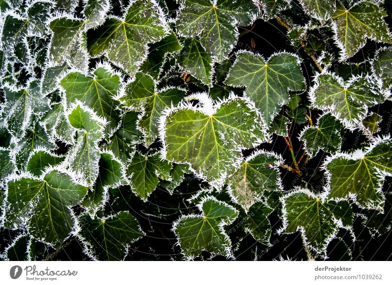 Nature Vacation & Travel Plant Green Leaf Landscape Animal Winter Environment Mountain Emotions Happy Moody Ice Tourism Trip