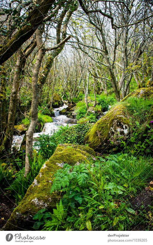 Moss jungle with brook Vacation & Travel Tourism Trip Expedition Environment Nature Landscape Plant Animal Elements Spring Bad weather Tree Bushes Wild plant