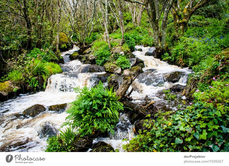 Nature Vacation & Travel Plant Tree Landscape Animal Forest Mountain Environment Life Spring Freedom Stone Tourism Hiking Waves