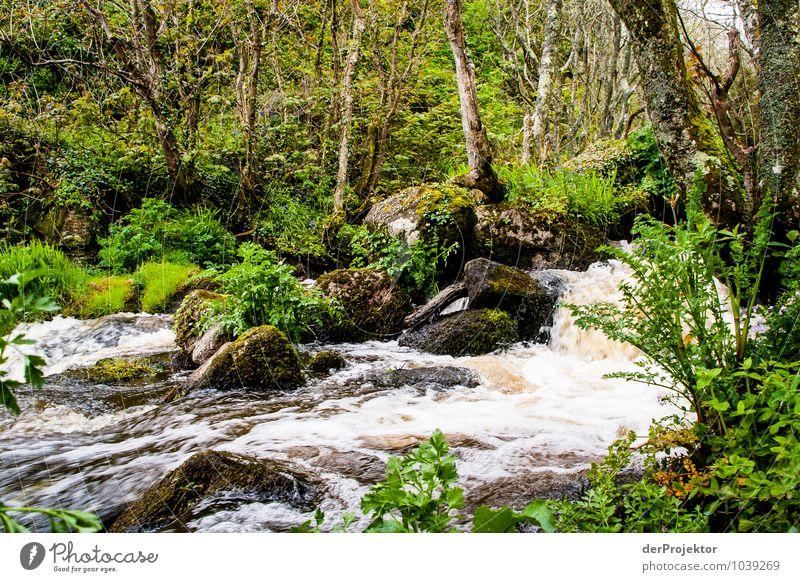 Nature Plant Tree Landscape Animal Forest Environment Emotions Grass Spring Waves Island Joie de vivre (Vitality) Elements River Moss
