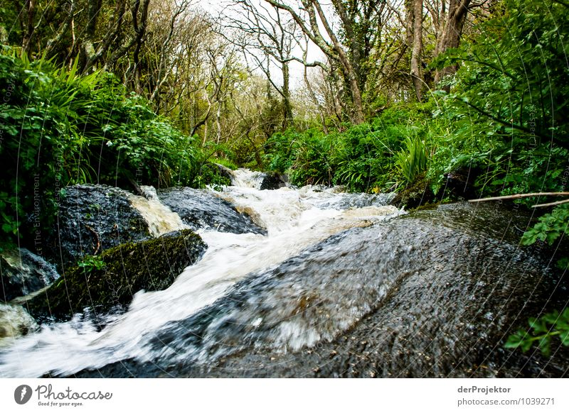 Wild stream in Cornwall Vacation & Travel Tourism Trip Adventure Safari Expedition Environment Nature Landscape Plant Elements Spring Bad weather Tree Moss