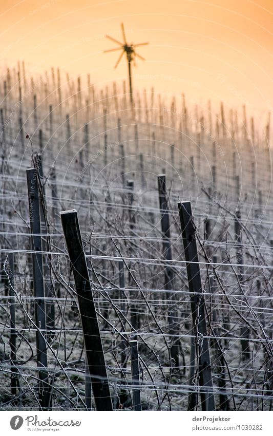 Klapotetz/Klapotek at the winter vineyard Environment Nature Landscape Plant Animal Elements Winter Beautiful weather Ice Frost Field Hill Mountain Emotions Joy