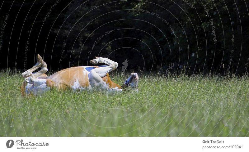 Air Legs Funny Back Horse Lawn Lie Mammal