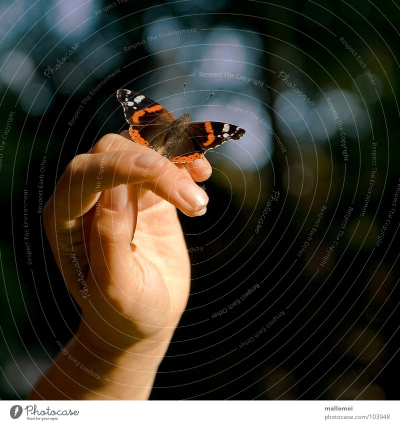 Nature Hand Calm Relaxation Emotions Happy Dream Contentment Skin Fingers Break Near Peace Wing Trust Uniqueness
