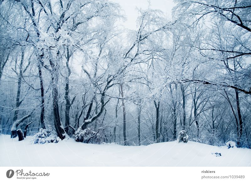 frozen forest Environment Nature Landscape Winter Climate Beautiful weather Ice Frost Snow Snowfall Forest Exceptional Cold Natural Blue Calm Dream Loneliness