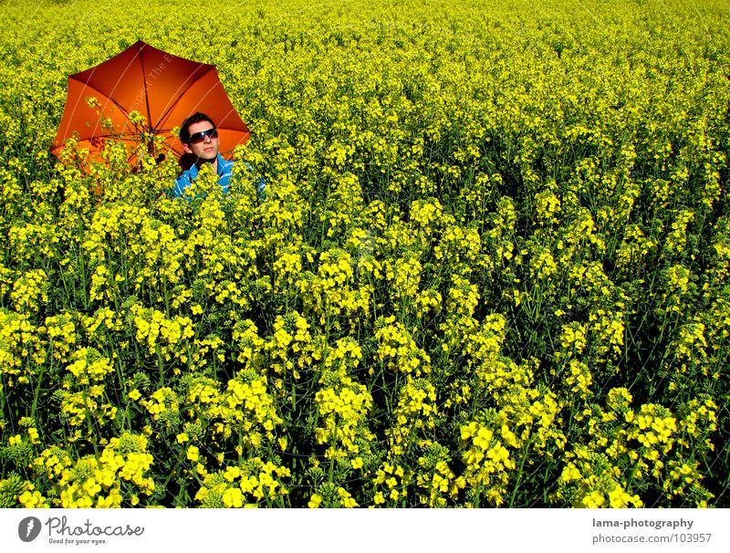 Summer Feeling To enjoy Sunbathing Calm Dream Lie Canola Canola field Field Meadow Agriculture Spring Jump Ear of corn Village Yellow Flower Relaxation