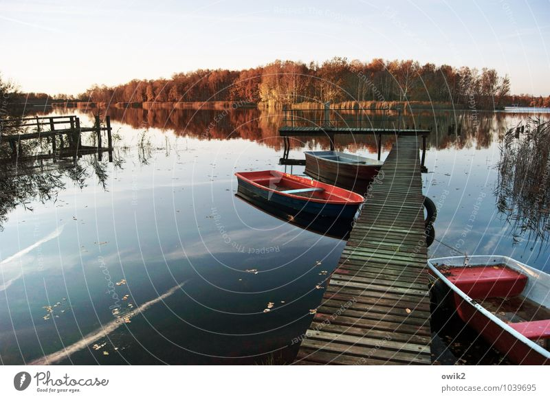 jetties Environment Nature Landscape Plant Cloudless sky Horizon Autumn Climate Beautiful weather Tree Bushes Forest Lakeside Island Wood Relaxation Lie Simple