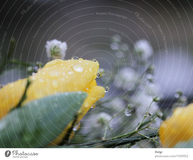 Nature Plant Green White Flower Leaf Calm Environment Yellow Blossom Spring Gray Glittering Lie Rain Authentic